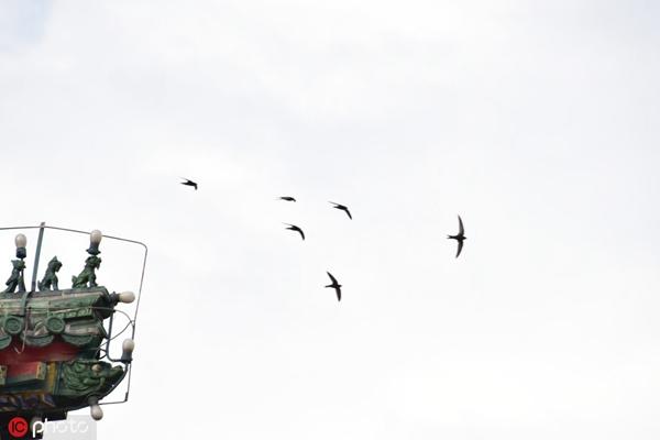 �yf�y���;_星辰文艺丨朱松林:每只雨燕都有重新出发的权利