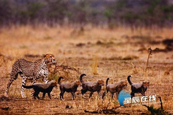 去肯尼亚看动物大迁徙 南航开通长沙—内罗毕直飞航线